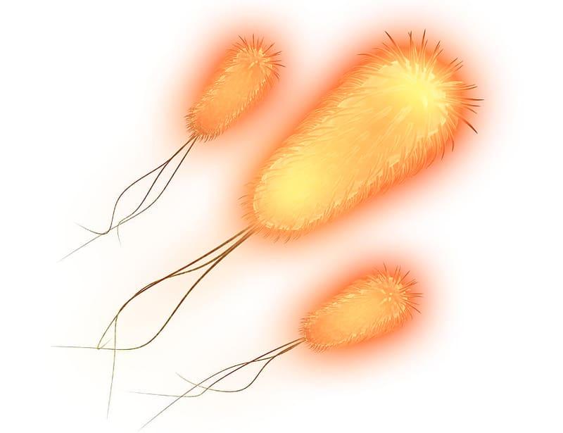 Από πού μάς ήρθε ο E-coli;