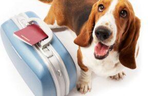Θα πάτε διακοπές; Ποιος θα προσέχει το ζωάκι σας;