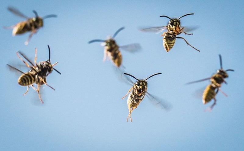 Κουνούπια, μέλισσες, σφήκες, τσούχτρες, μπορεί να γίνουν ιδιαίτερα ενοχλητικά τώρα το καλοκαίρι-naturanrg