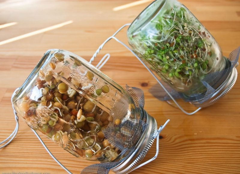 Πώς θα δημιουργήσετε φύτρα-naturanrg