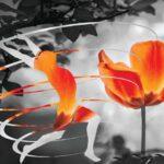 Η θαυμαστή δύναμη της αυτοθεραπείας