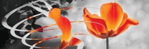 naturanrg76-aftotherapia-Η θαυμαστή δύναμη της αυτοθεραπείας