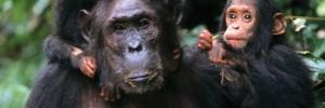 pataki-oi-nearoi-ximpantzides-tou-gkompe-naturanrg