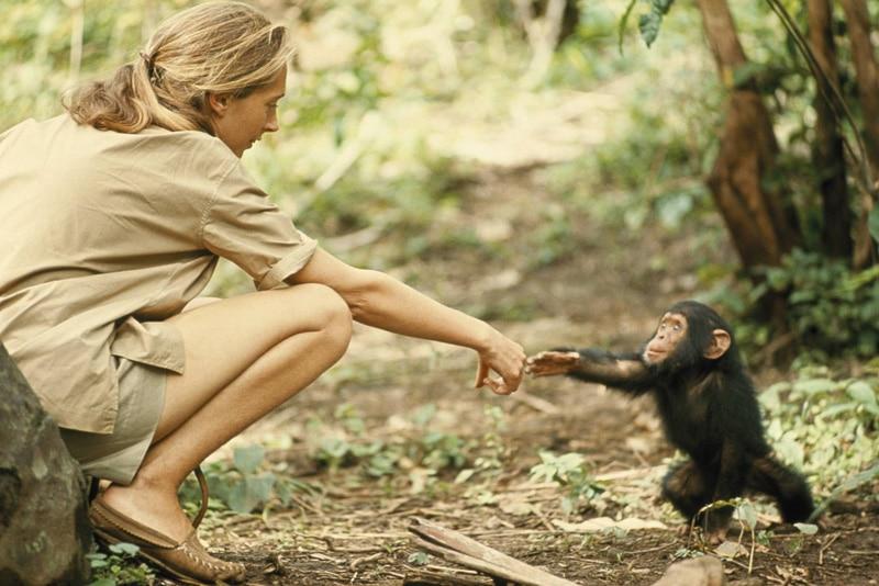 NaturaNrg#78-Goodall1-Jane Goodall