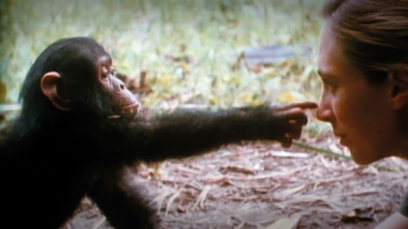 NaturaNrg#78-Goodall3-Jane Goodall
