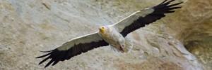 gypas-ornithologiki-Naturanrg