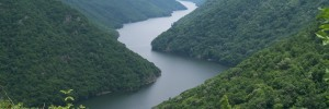 Τα ελληνικά δάση στο «Ελευθέριος Βενιζέλος»