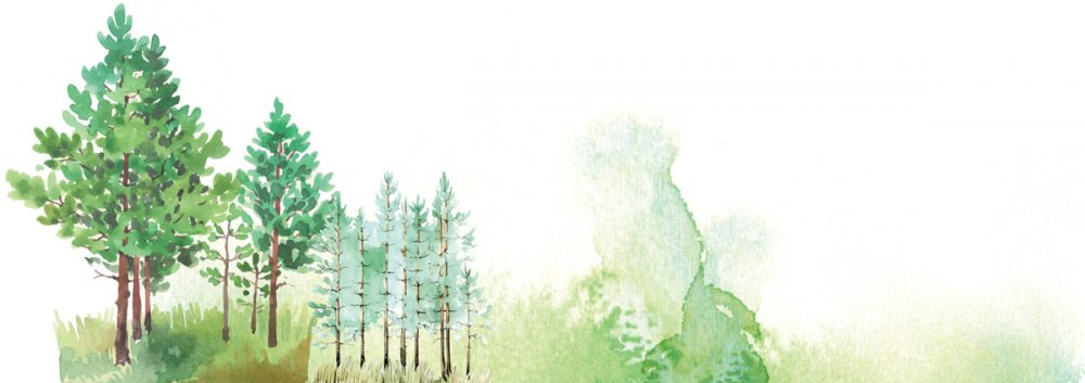 Shinrin-Yoku-Forest-Bath2-naturanrg#81-Shinrin-Yoku. Άφησε τη φύση να σου διώξει το στρες!