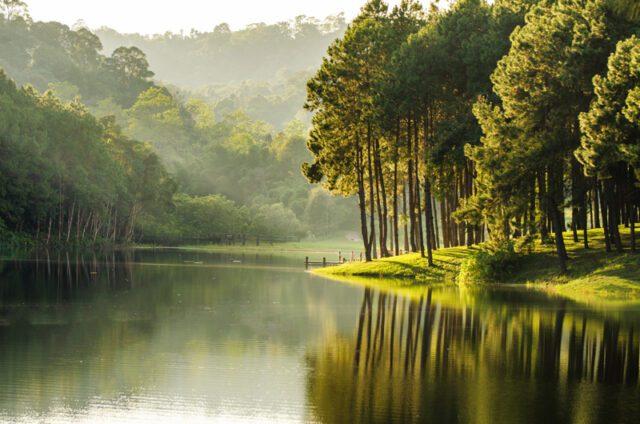Shinrin-Yoku-Forest-Bath3-naturanrg#81-Shinrin-Yoku. Άφησε τη φύση να σου διώξει το στρες!