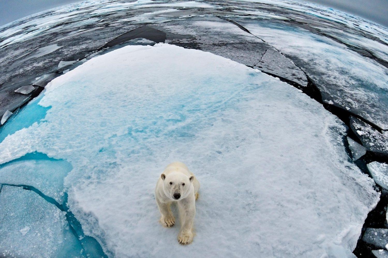 Συναγερμός για τον Αρκτικό Ωκεανό