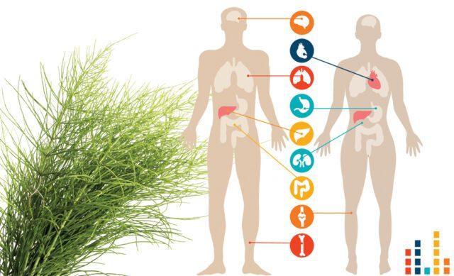 Πυρίτιο: το δώρο της φύσης για υγεία και ομορφιά