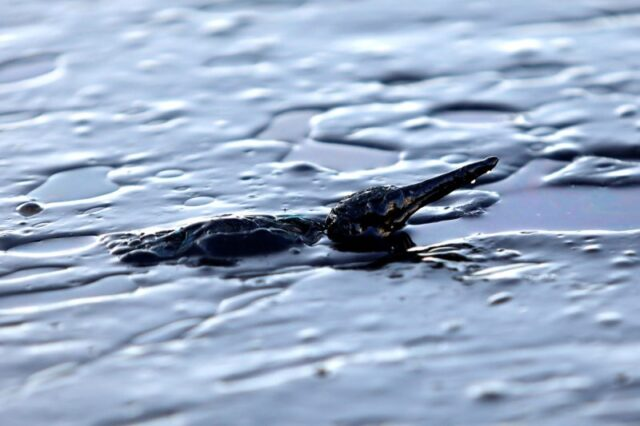 «Μαύρισαν» οι ακτές στο Σαρωνικό