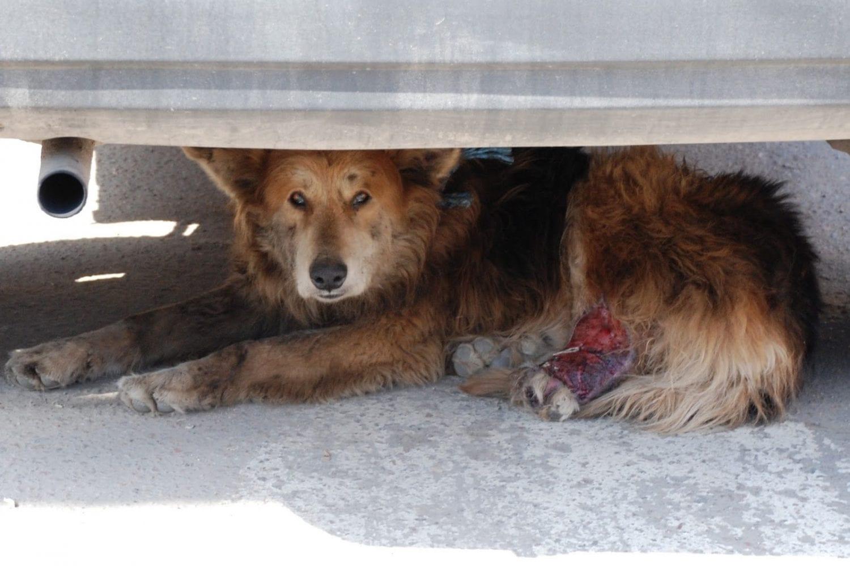 SOS για τα αδέσποτα ζώα της δυτικής Αττικής