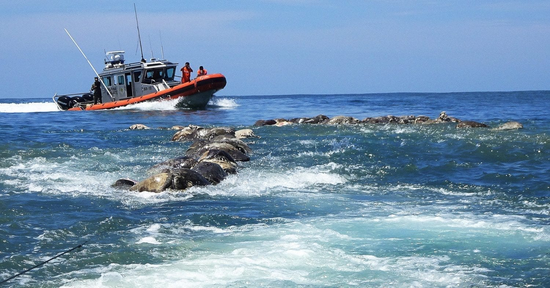 Εκατοντάδες θαλάσσιες χελώνες νεκρές στο Μεξικό-naturanrg