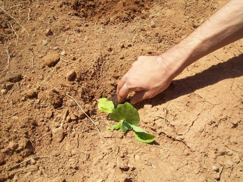 Δημιουργώντας ένα αγρόκτημα για τον αυτισμό!