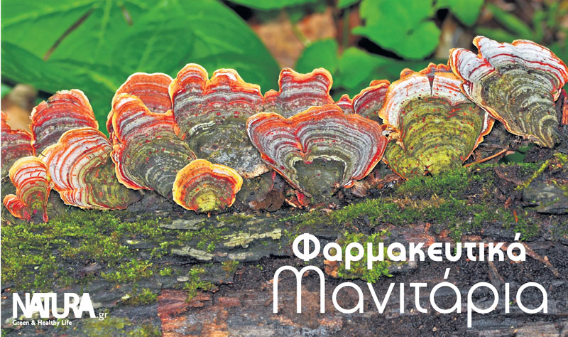 4 Top Φαρμακευτικά Μανιτάρια-naturanrg