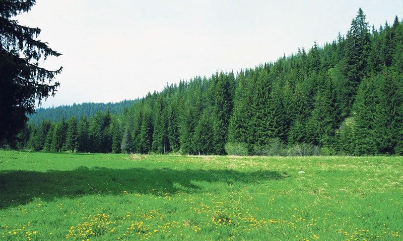 Ένα αυθεντικό μουσείο της φύσης βρίσκεται στη Δράμα-Natura nrg