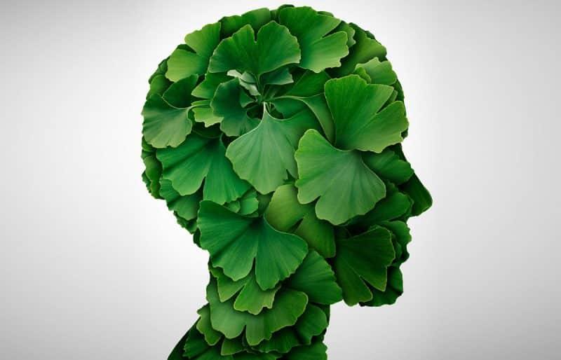 Ginkgo biloba: είναι το μαγικό φίλτρο για την καρδιά, το άσθμα και τη μνήμη;