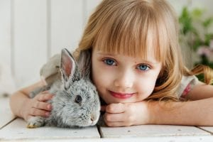 Ζώα συντροφικότητας