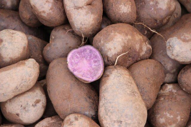mov-patates
