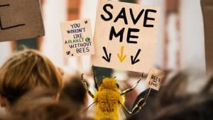 «B» Η μέλισσα influencer χρησιμοποιεί το instagram για την προστασία του είδους της