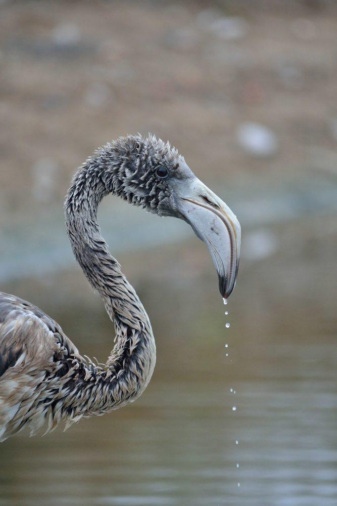 flamingo - natura nrg