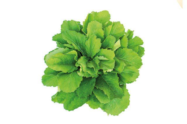 Φύλλα μουστάρδας: Ένα superfood στη σαλάτα σας