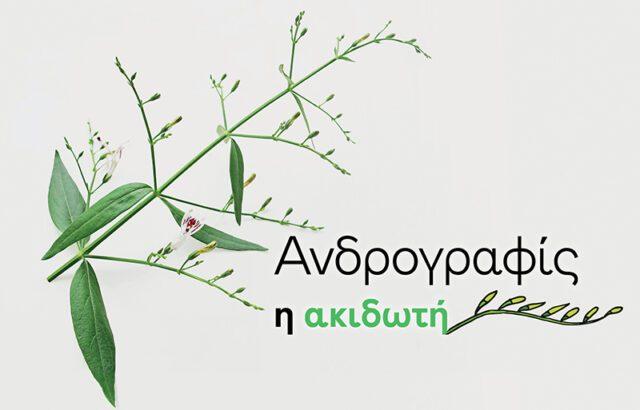 Το βότανο ανδρογραφίς ή ακιδωτή