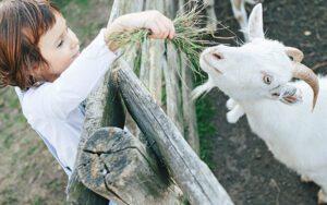 Αγροτουρισμός: επιστροφή στη φύση και στις ρίζες της τροφής μας