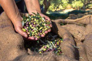 Ο ρόλος της γυναίκας στον αγροδιατροφικό τομέα