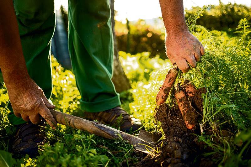 Αναγεννητική καλλιέργεια: Μπορεί να σώσει τον πλανήτη;