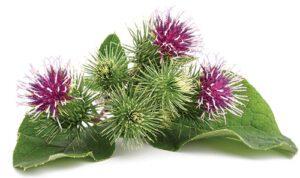 6 βότανα για να τονώσετε το ανοσοποιητικό