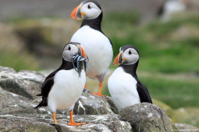 Θαλάσσια Προστατευόμενη Περιοχήανακηρύσσεταιο «παράδεισος» των θαλασσοπουλιών
